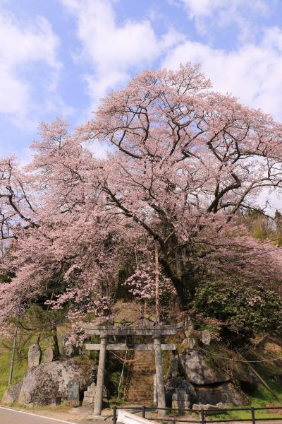 新殿神社 4月22日の様子