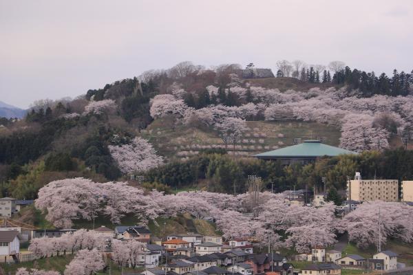 お城山 4月19日の様子01