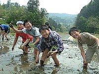 子どもたちが田植えをしている写真