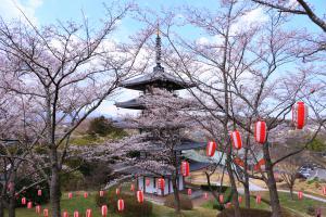 安達ヶ原公園の桜