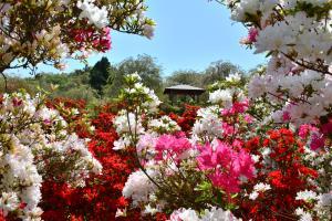 「春の風景」部門最優秀賞:フラワーゲート