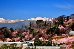 お城山は花盛り