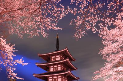 桜」部門最優秀賞 ふるさと村の夜桜