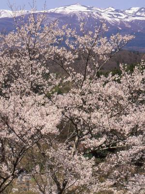 「桜」部門優秀賞 ふるさと爛漫