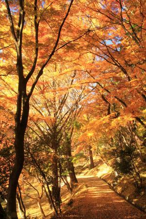 「秋」部門入選 黄金の散歩道