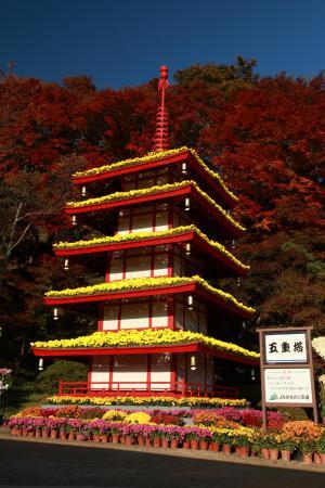 「菊人形」部門入選 黄金の五重塔