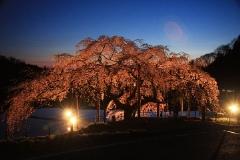 「桜」部門 春の宵