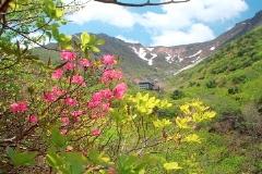 「安達太良(春・初夏)」部門 高原の風