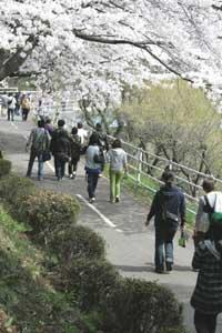 観音丘陵遊歩道の写真