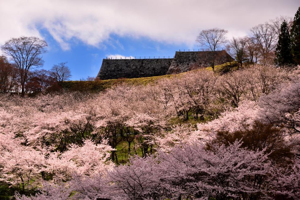 Prefectural Kasumigajo Castle Park