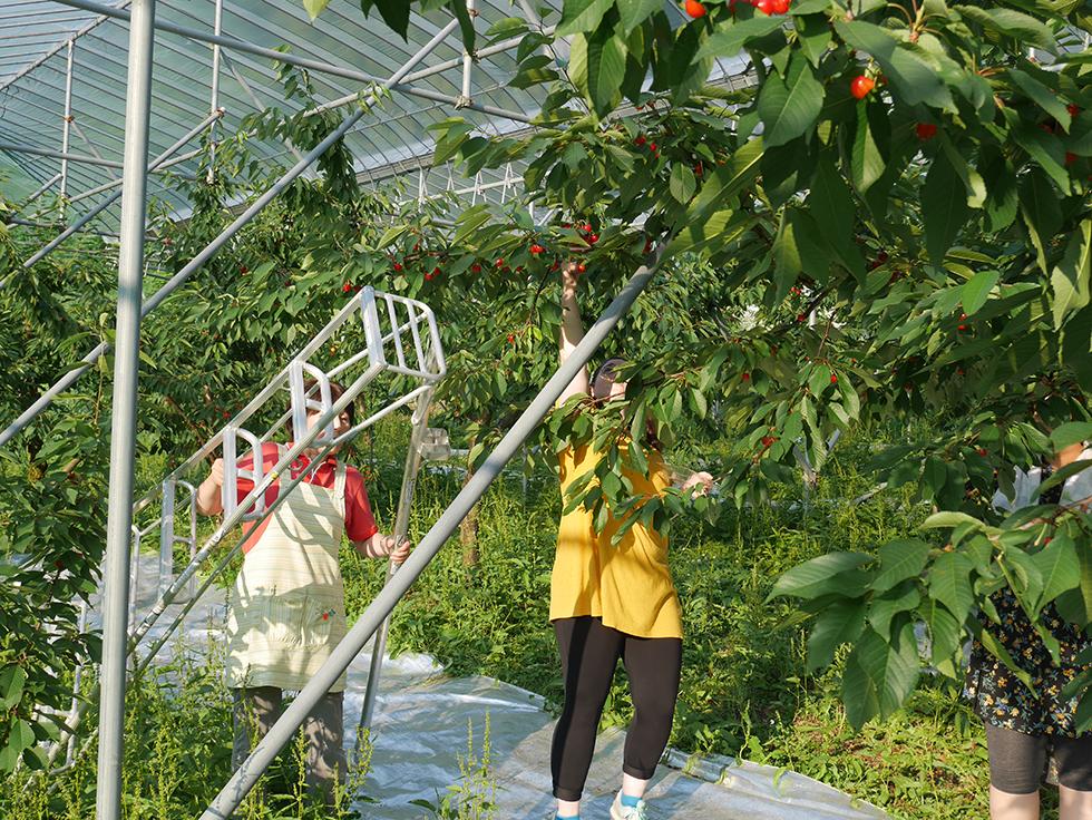 23水果採摘