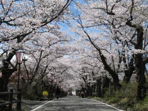 08 岳温泉01桜坂
