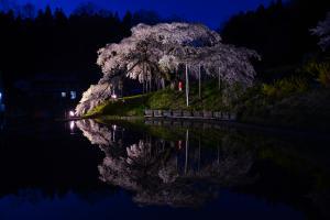 13 中島の地蔵桜03