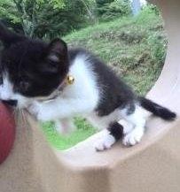 茶園迷子猫