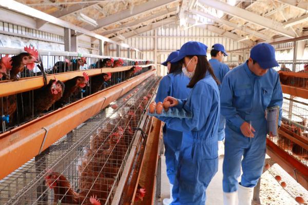 安達東高校の卵(収穫作業)