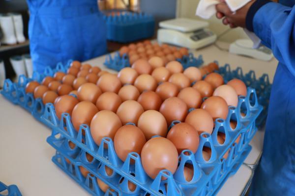安達東高校の卵