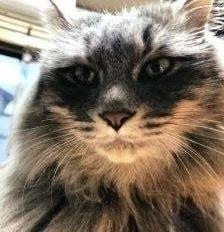 大壇迷子猫