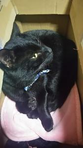 西町迷子猫3
