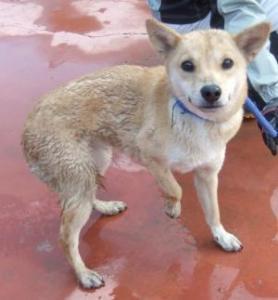 毘沙門堂保護犬
