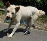 東新殿字谷地頭 保護犬