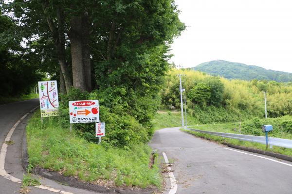 羽山サクランボ(道路標示)