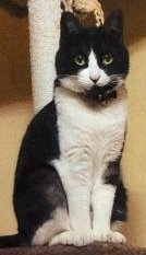 竹ノ内迷子猫