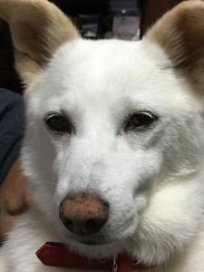 中山田 迷子犬