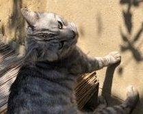 蓬田 迷子猫