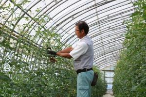 トマト農家2