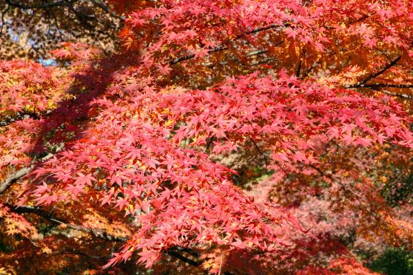 霞ヶ城公園紅葉1