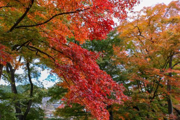 霞ヶ城公園紅葉4