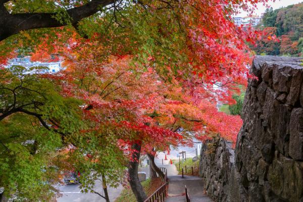 霞ヶ城公園紅葉6