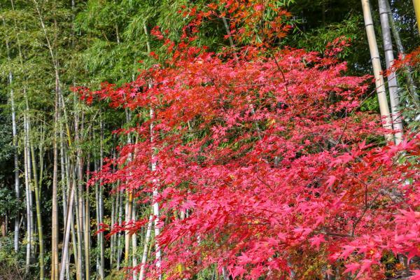 霞ヶ城公園紅葉7