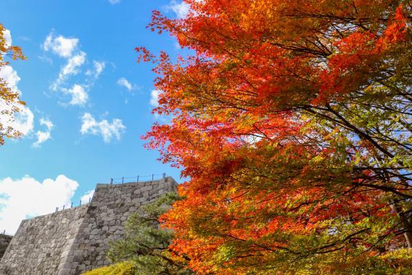 霞ヶ城公園紅葉8