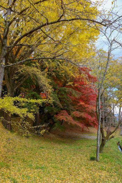 霞ヶ城公園紅葉9