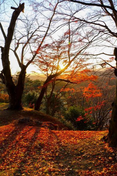 霞ヶ城公園紅葉13