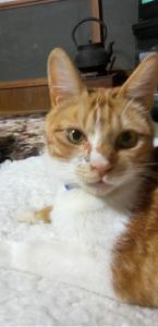 蓬田 迷子猫➁