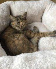 鈴石東町 迷子猫 ➁