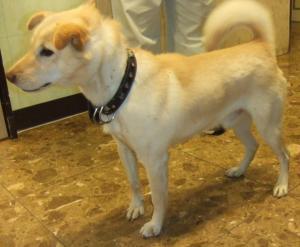 R21218 南町 保護犬