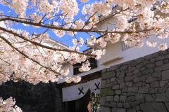 『二本松の桜の名所・開花情報』の写真