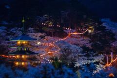 『2021年二本松の桜まつり・ライトアップ情報』の写真
