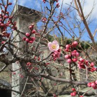 校庭の花が咲き始めました